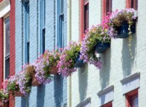it-a-beautiful-world- flowers-in-window-boxes