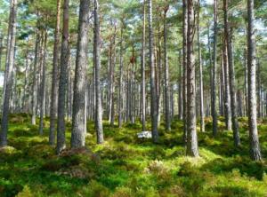 deforestation-forest