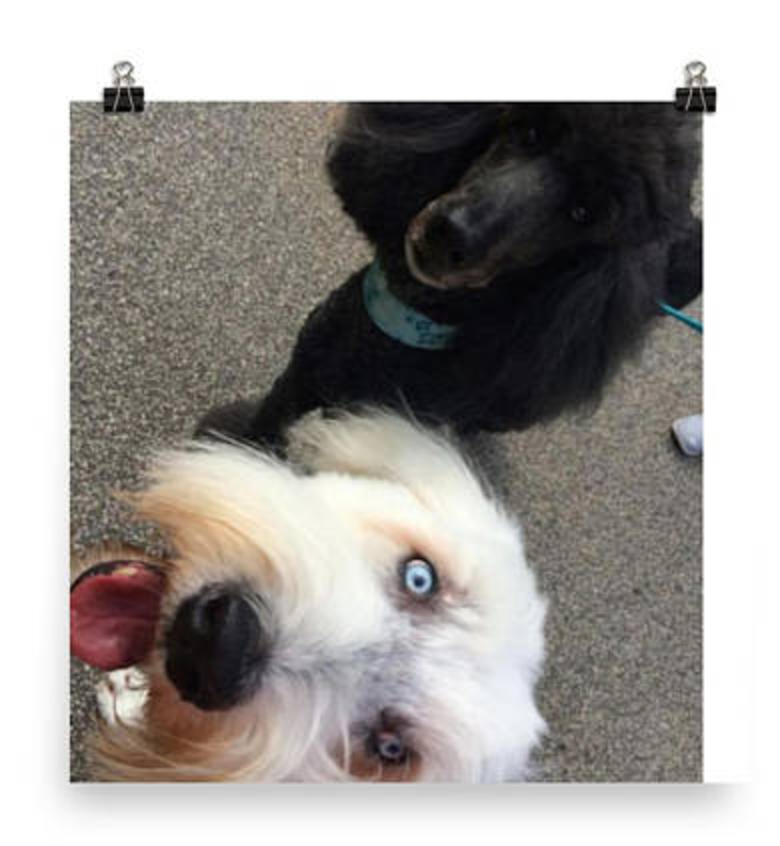 Let these guys make you smile. Click image to get your poster now!