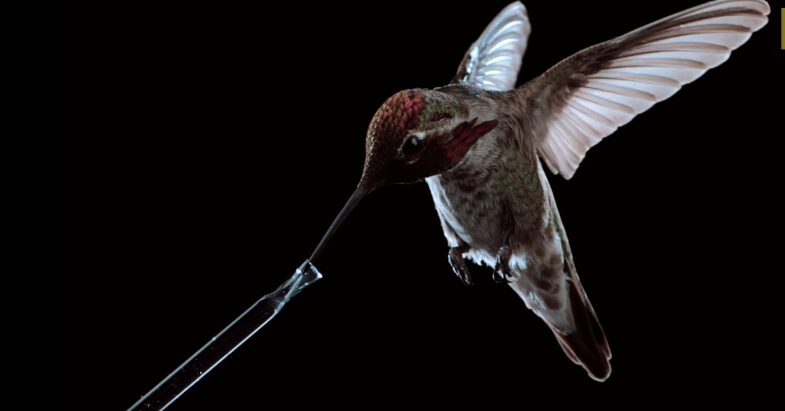 weekly-inspirational-video-hummingbirds