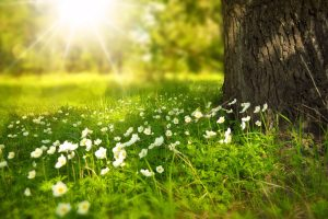 field-with-sunshine