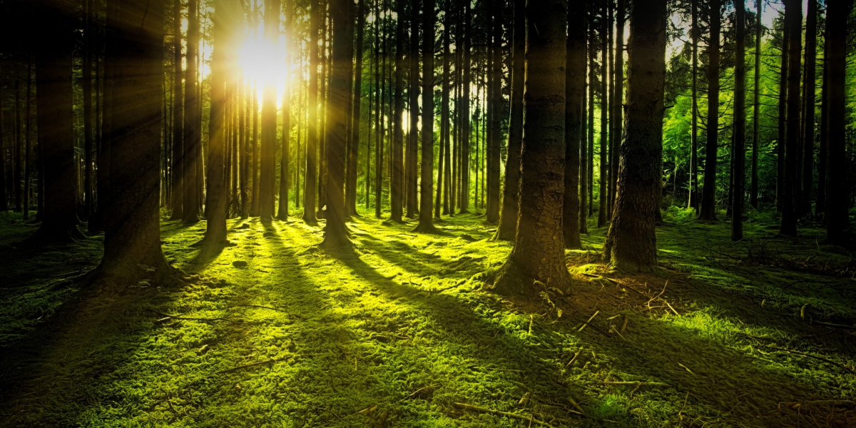 forest-bathing-benefits